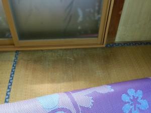 畳の表面はふやけていました。